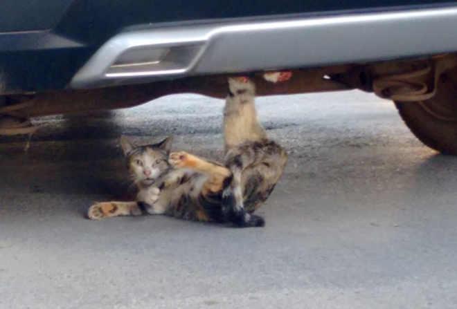 Gato fica preso em para-choque de carro e é resgatado por bombeiros