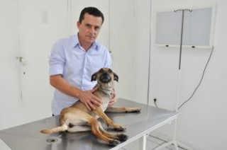 Eles fazem a diferença: veterinários de BH que se dedicam a salvar animais carentes