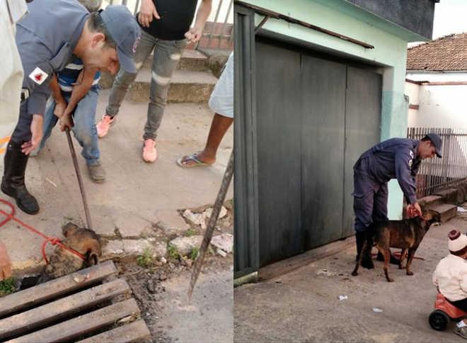 Cachorro é resgatado por bombeiros após cair em bueiro de Lavras, MG