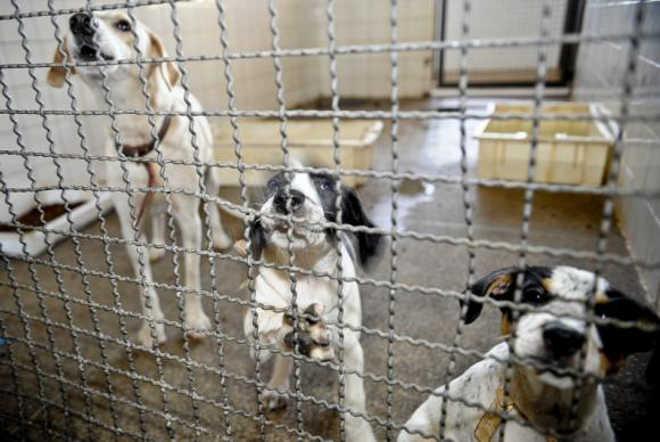 Agora é lei: maus-tratos contra animais podem gerar multa de até R$ 3 mil em Minas Gerais