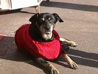 Moradores adotam 'cães comunitários' em ruas de Uberaba, MG