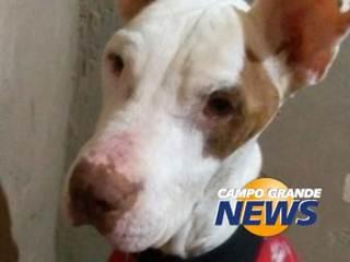 Após tratamento, Bolt é adotado e já exibe quilinhos a mais