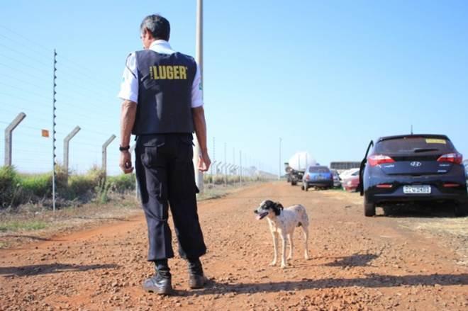 Família do tutor quer levar para casa cão que vive no pátio do Detran