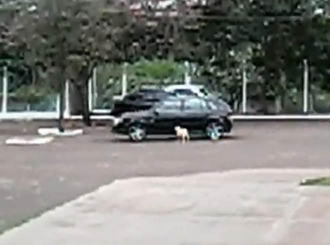 Vídeo: cão é abandonado no CCZ, mas ele persegue o carro da tutora