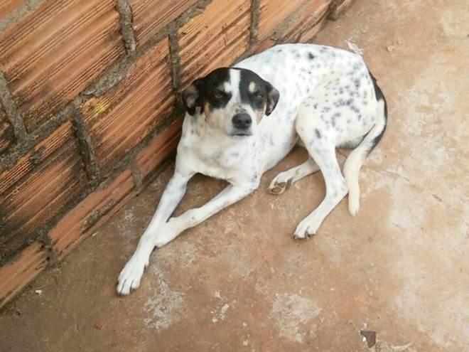 Vigia leva para casa cão que morava em carro batido no Detran de MS