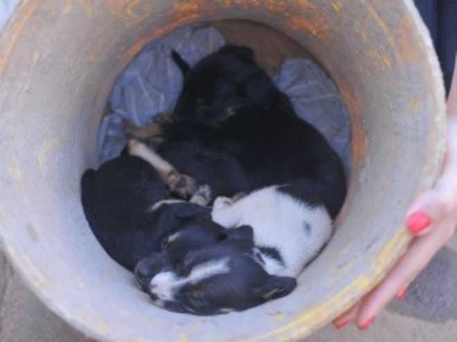 Cãezinhos são abandonados em frente a posto de saúde no Tiradentes, Campo Grande, MS