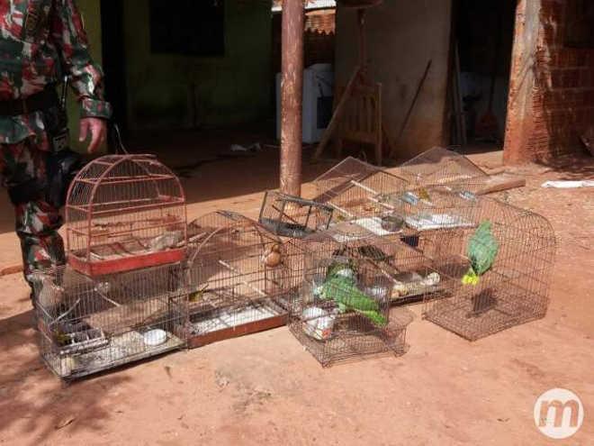 Homem é multado em R$ 28 mil por criar pássaros ilegalmente, em Nova Andradina, MS