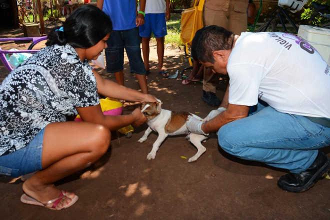 Com meta de 21 mil cães vacinados, Campanha de vacinação contra raiva é superada em Corumbá, MS