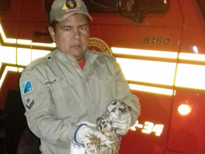 Bombeiros resgatam cachorro em despenhadeiro e coruja no emaranhado de fios de pipa, em Corumbá, MS