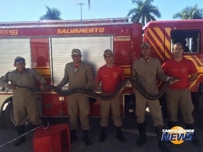 Sucuri de 5 metros é resgatada enquanto crianças apedrejavam animal em Ladário, MS