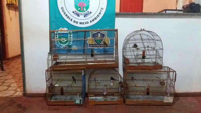 PMA autua criador de pássaros em R$ 5 mil por manter cinco aves ilegalmente em cativeiro em Nova Andradina, MS