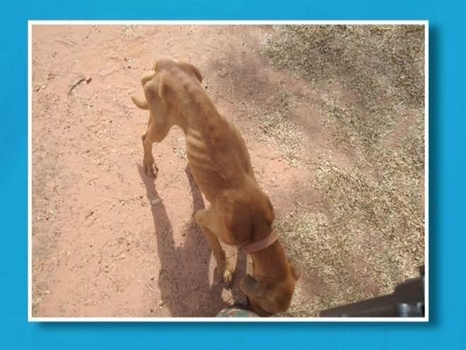 Polícia salva dois cachorros de maus-tratos em Três Lagoas, MS