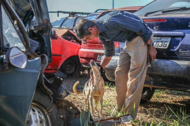 Depois de meses morando em carro do ex-tutor no Detran, cachorro é adotado