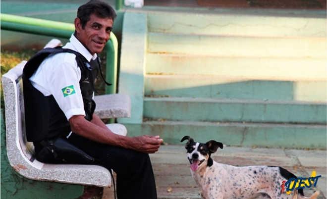 Após acidente e morte de tutor, cão permanece com o veículo no Detran-MS