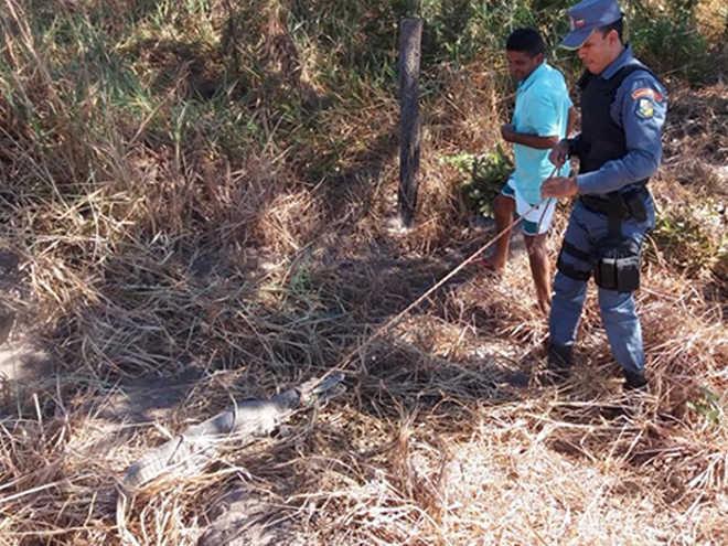 Jacaré é resgatado por policiais após passar 4 dias preso em poço em Cana Brava do Norte, MT