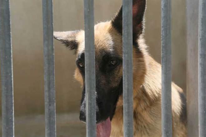 Macau aprova lei de proteção dos animais que pune crueldade com prisão