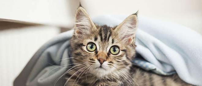 Existe um mistério na Nova Zelândia: Onde vão parar os gatos?