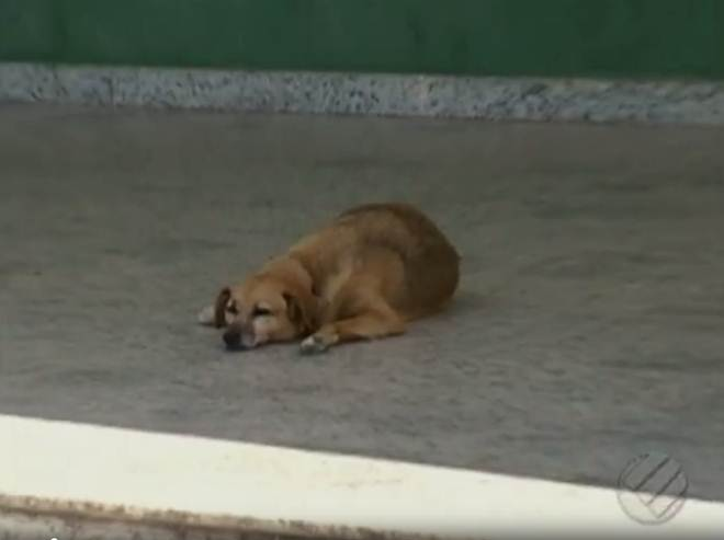 UFRA denuncia abandono de animais domésticos no campus de Belém, PA
