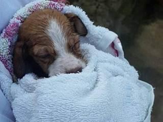Situação de abrigo de animais que pode fechar é debatida em Belém