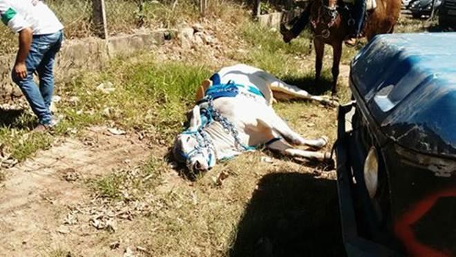 PA: Marabaenses denunciam maus-tratos de animais na cavalgada da expoama, e condenam MP por falta de fiscalização
