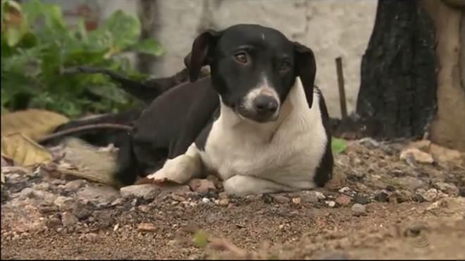 Moradores denunciam possível envenenamento de cães na Paraíba