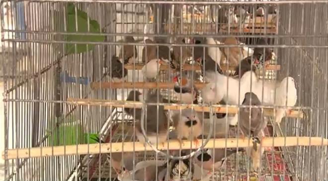 Venda ilegal de animais silvestres é flagrado em feira de Campina Grande, PB