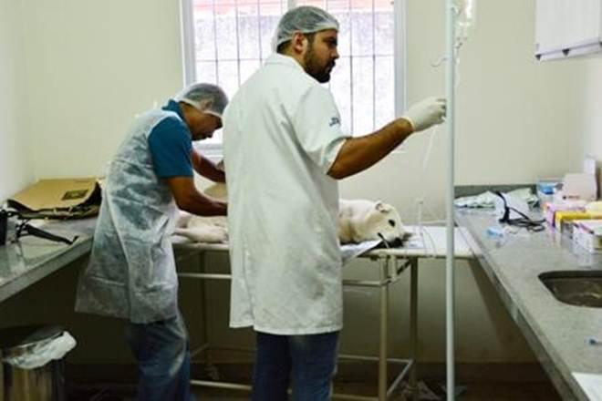 Prefeitura de João Pessoa (PB) oferece serviço de esterilização de animais para controle populacional de cães e gatos