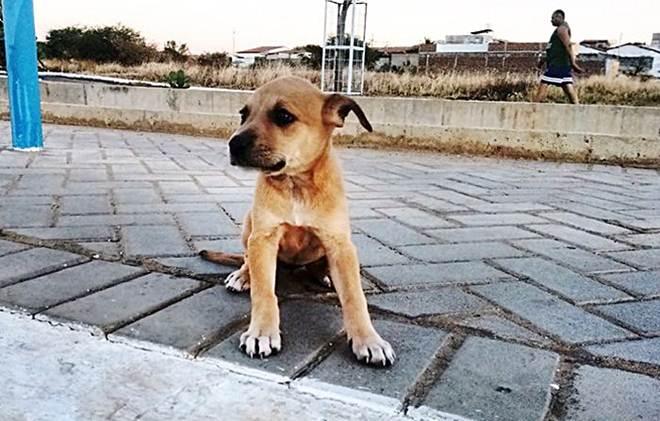 Aumenta número de cães abandonados pelas ruas no Sertão da Paraíba