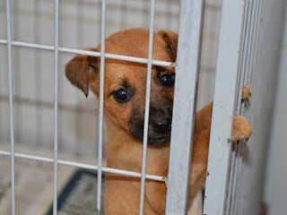Fim de semana tem feira de adoção de cães e gatos em João Pessoa, PB; veja programação