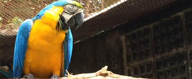 CPRH devolve araras e tucanos à Amazônia