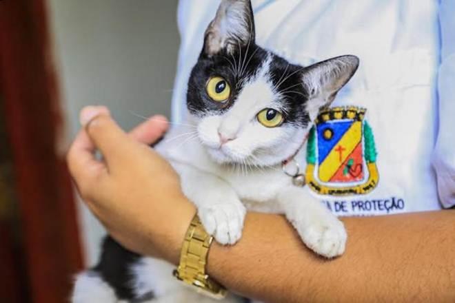 Gerência de Proteção Animal realiza mais uma campanha de adoção de animais em Caruaru, PE