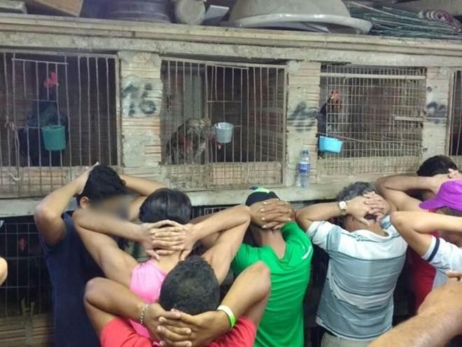 Polícia resgata 60 aves e detém cinco pessoas durante rinha em Caruaru, PE