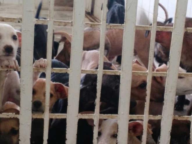 Mesmo fora da campanha, animais podem ser vacinados contra raiva em Petrolina, PE