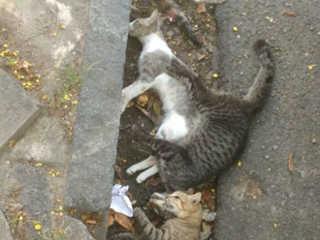 Gatos são encontrados mortos nas imediações do Mercado da Encruzilhada em Recife, PE