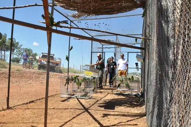 Cemafauna participa de soltura branda de aves do projeto Papagaio da Caatinga