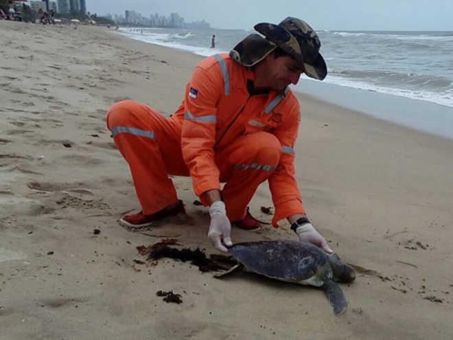 Corpo de tartaruga foi encontrado encalhado na praia de Jaboatão dos Guararapes, PE