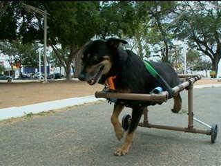 PE: Estudantes da Univasf desenvolvem cadeira para cachorro deficiente