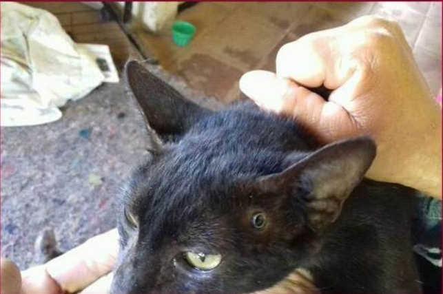 Após resgatar gato com bala alojada na cabeça, grupo denuncia agressor em Parnaíba, PI
