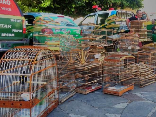 Polícia resgata 48 animais silvestres e pássaro em extinção no interior do PI