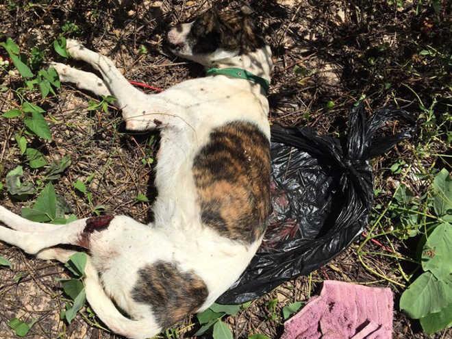 Grupo denuncia homem suspeito de matar cão a pauladas e facadas em Teresina, PI
