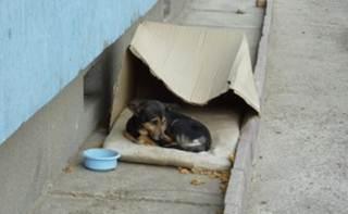 Veterinário é multado em R$ 10 mil por atender animais abandonados