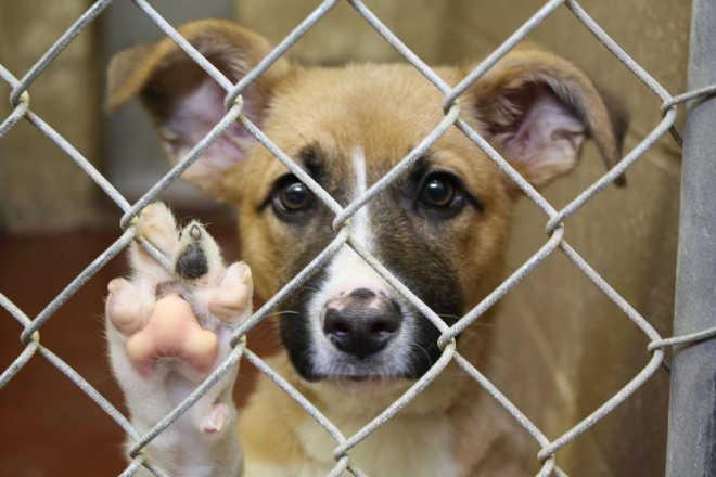 Após polêmica, Conselho suspende multa a veterinário que atendia animais de rua no Piauí