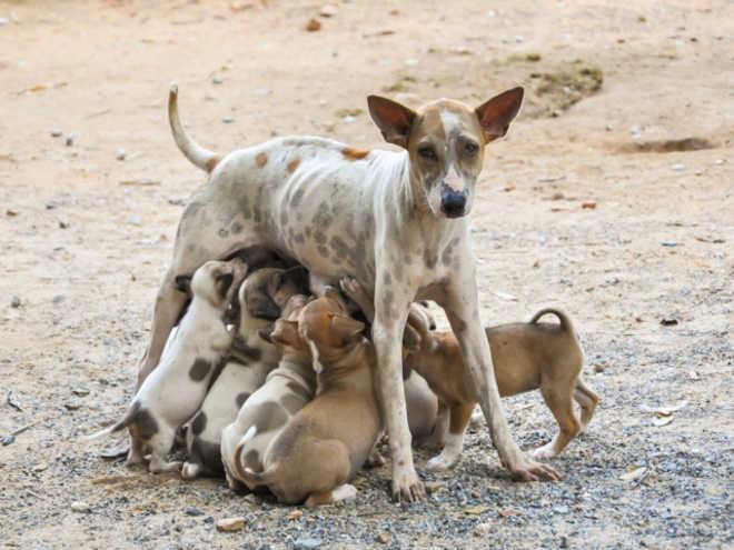 Zoonoses recebe cadastros para castração de animais de pessoas de baixa renda em Teresina, PI
