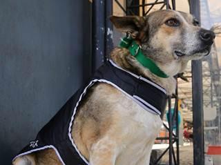 Cães de rua de Curitiba (PR) ganham roupa para enfrentar o frio