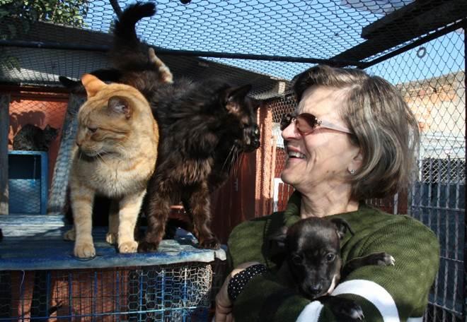 Fé, fios e aulas de português: a inusitada história de um lar de gatos em Curitiba, PR