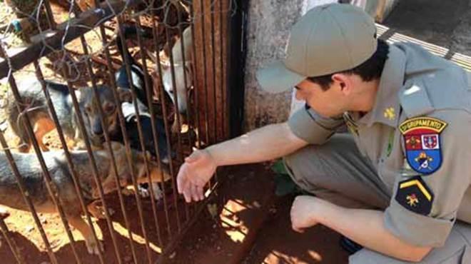 Cães abandonados são resgatados em casa na área central de Londrina, PR