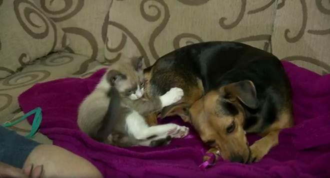 Cadela 'adota' e amamenta filhote de gato em Maringá, no Paraná