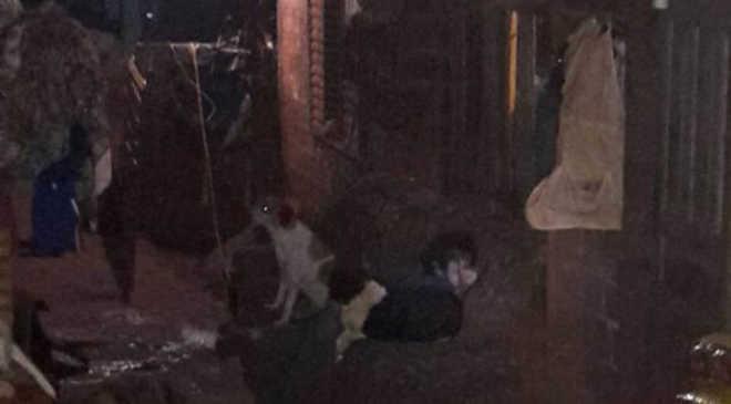Cuidadora morre e mais de 60 cachorros ficam abandonados em Paiçandu, PR