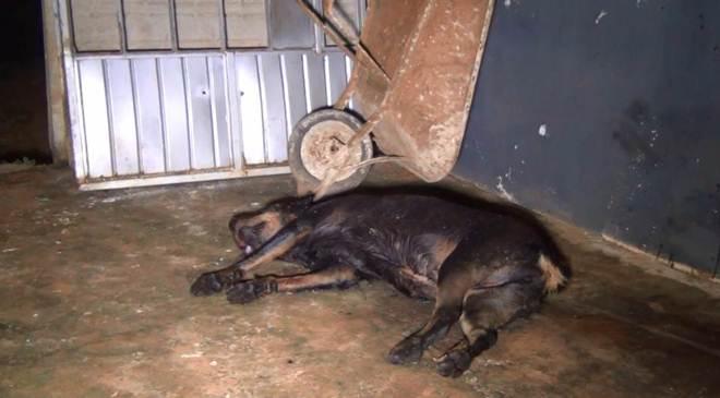 Cachorros são mortos a tiros de pistola em Ponta Grossa, PR