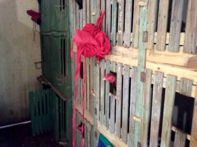 MP diz que 552 aves apreendidas eram treinadas para rinhas no Paraná